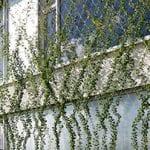 netten groene wanden